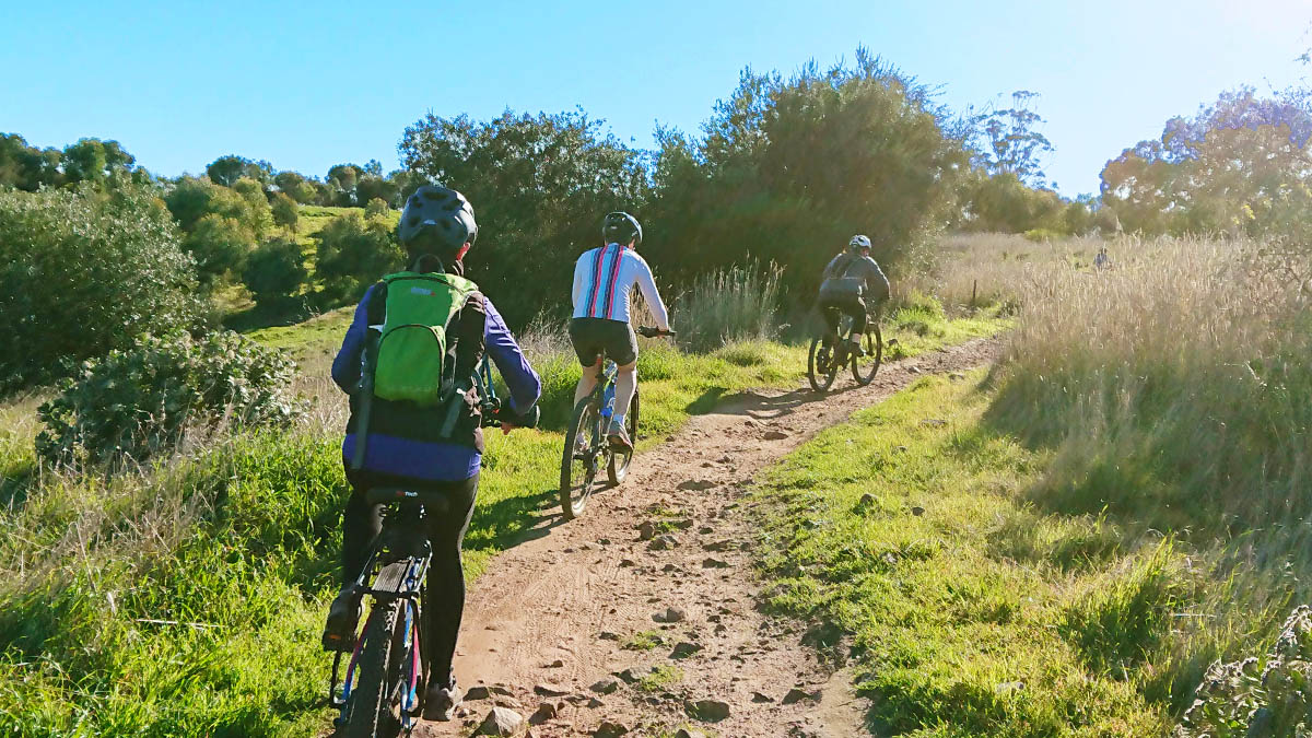 A group of mountain bikers riding on a trail